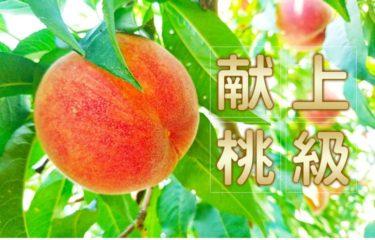 最高糖度18度!完熟極甘の桃を楽天市場でお取り寄せ