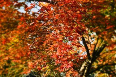 楽天トラベル 秋冬旅セール  Go To トラベル併用可能クーポンでお得