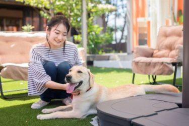 沖縄ホテル 愛犬と泊まれる部屋のあるペット同伴可能なホテル6選